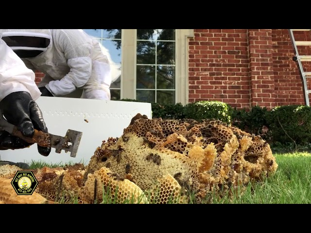 Beekeepers Collecting Honey in Plano, Texas