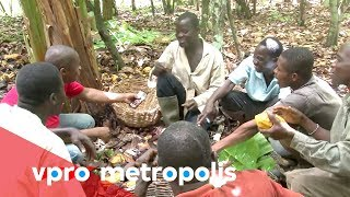 First taste of chocolate in Ivory Coast - vpro Metropolis thumbnail