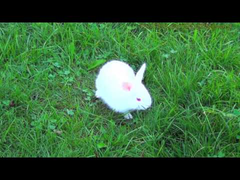 White Bunny With Red Eyes