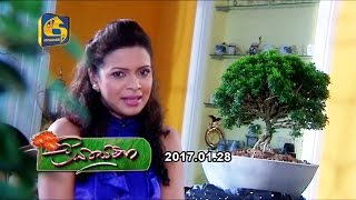 Liya Sewana - 28th January 2017