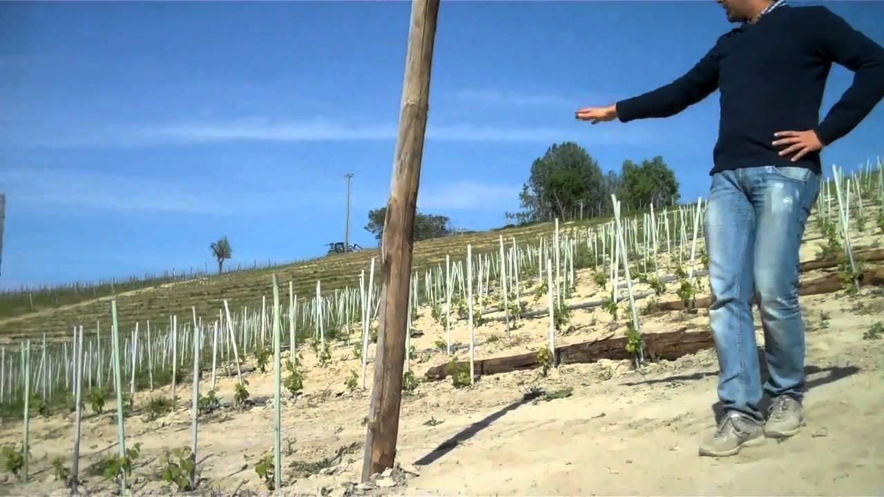 rivetto wines pali per la nuova youtube