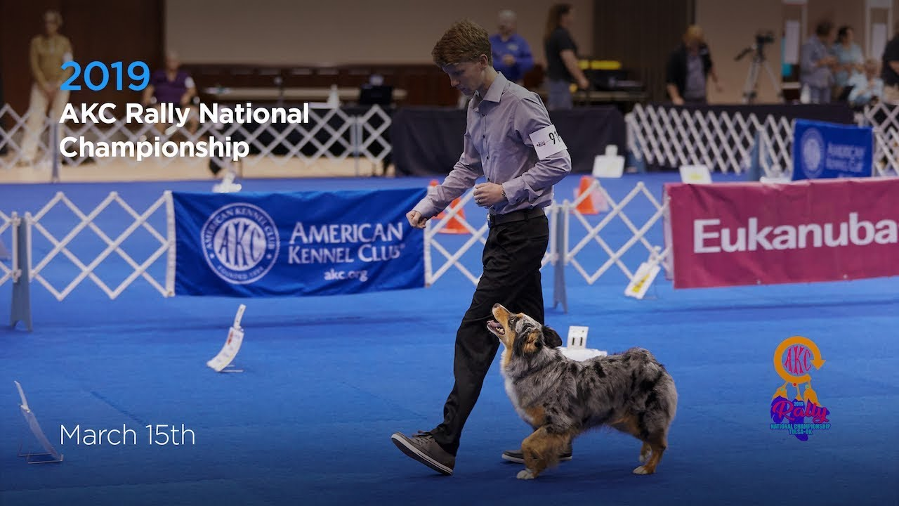 Akc Rally National Championship Akc Tv Ring 1 And Ring 8 Youtube