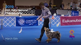 AKC Rally National Championship! AKC.TV Ring 1 and Ring 8