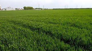 Успешно земеделие - броят от 16.05. 2019