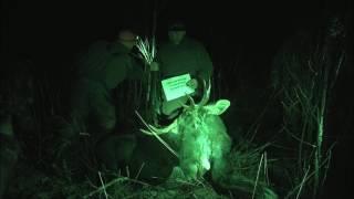 Загонная охота на лося 2017