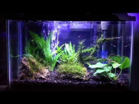 5 5 Gallon Nano Planted Aquarium Youtube