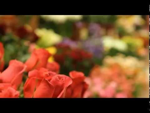 """""""Цветы у яблоньки"""" в программе """"Штрих-код""""из YouTube · Длительность: 2 мин  · Просмотров: 921 · отправлено: 07.06.2012 · кем отправлено: Цветы у Яблоньки"""