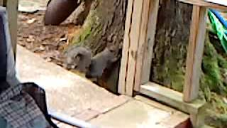 SCREWY SQUIRREL