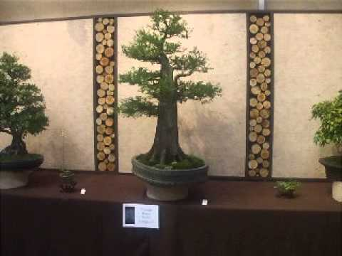 Colin Lewis critiques Triangle Bonsai Society display at 2012 Carolina Bonsai Expo