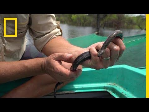 Why Snakes Are Disappearing From Southeast Asia's Largest La