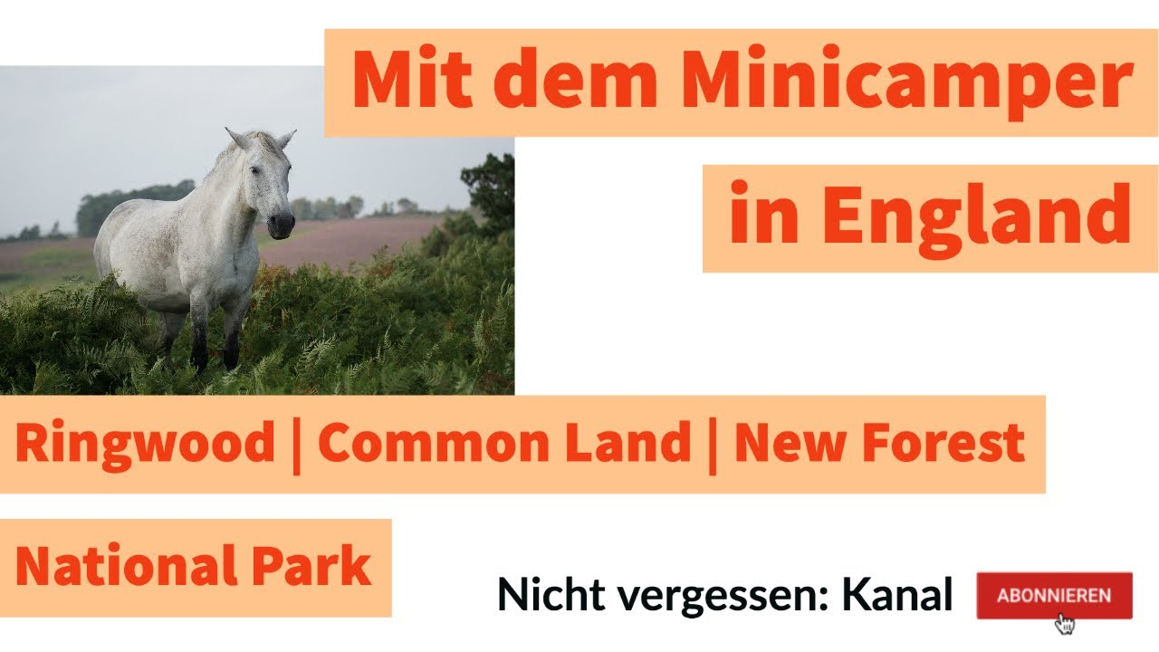 Ringwood | Common Land | New Forest National Park | Mit dem Minicamper in England