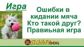 Игра с собакой правильная.   Ваши ошибки,  кто друг собаки  основа дрессировки  урок по воспитанию