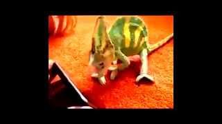 Những tình huống siêu hài hước, siêu dễ thương của động vật Phần 1