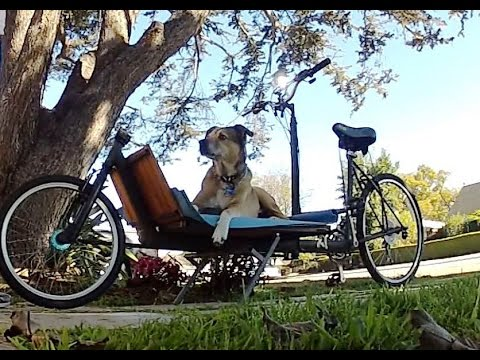 Ollie (my dog) Riding a Cargo Bicycle