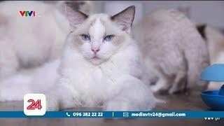 Chàng trai 9X bỏ tiền tỉ sưu tập mèo| VTV24