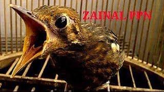Video KISAH SUKSES : Ternak Anis Merah Teler Omset Puluhan Juta Ring Zainal PPN Pupuan Bali download MP3, 3GP, MP4, WEBM, AVI, FLV Juni 2018