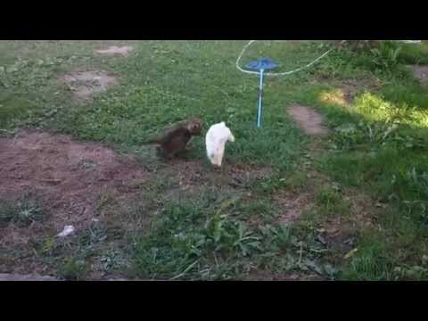 A Tiny Kitten And A Bunny Play Tag