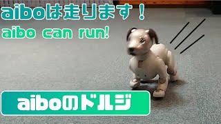 走るaibo - aibo can run. 【アイボ】