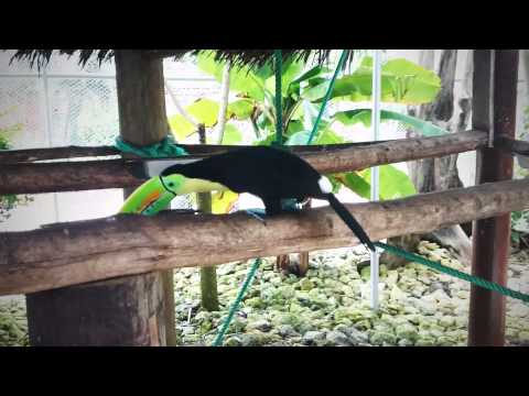 A Day at Safarick's Zoo and Animal Rescue in Maria Chiquita, Panama.