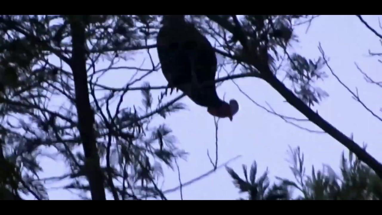 Bidikan terlama ketika berburu ayam hutan, alhamdulillah poin