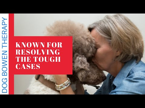 Niagara's best therapy for dogs. Dog Bowen Therapy Neurological Restoration