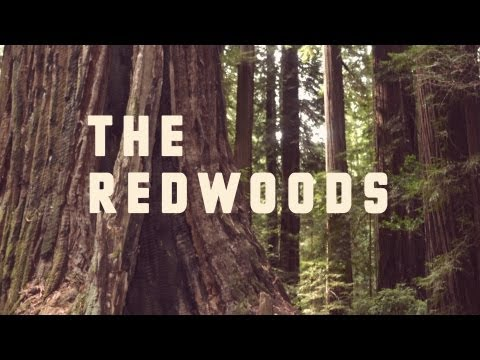 The Redwoods. September 2013
