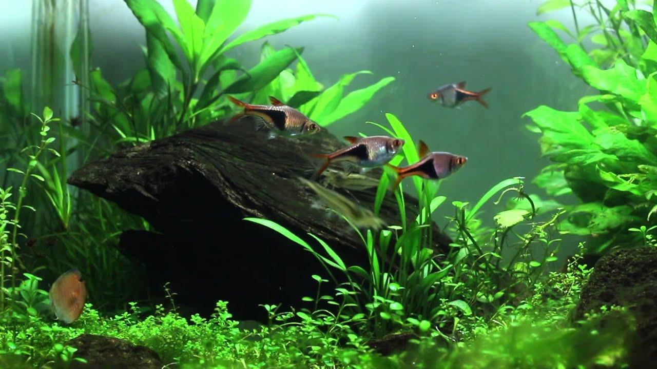 Aquascaping Nano Tank 45 Liter Tank Aquatic Nature Youtube