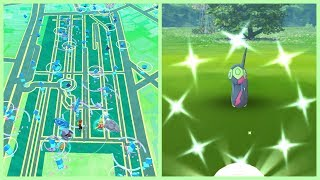 NEW SHINY REGIONAL POKEMON EVENT IN POKEMON GO! Looking for Shiny Seviper!