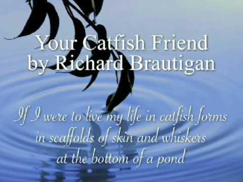 Catfish Friend