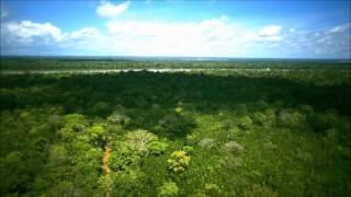 Amazone regenwoud ontbossing