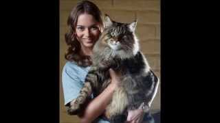 一誓と申しますm(_ _)m 色々な猫の画像をご紹介しています。猫が大好きな...