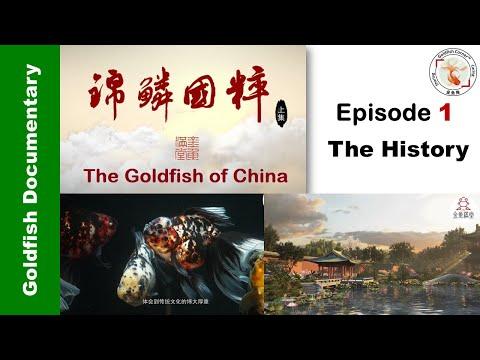 "Goldfish Of China 1 ""The History"" 锦鳞国粹 👉"