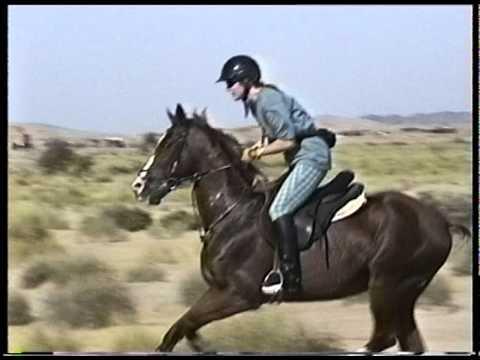 Jeddah Horses