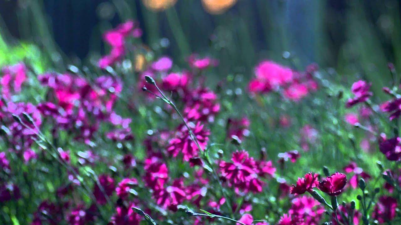 Nature fleur et relax youtube - Initiatives fleurs et nature ...