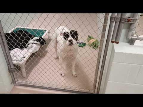 Dog Adoption Walk Thru 12-27-16