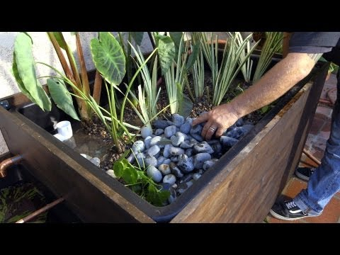 Patio Pond with Bog Filter | Planting the Pond Plants - Part 11