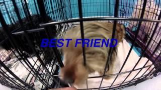 Pet ResQ Inc.-  TAKE ME HOME