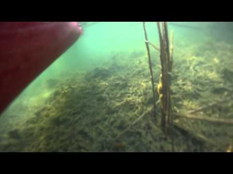 Northern Illinois Paddlers: Underwater In Lake Attwood in Crystal Lake, IL.