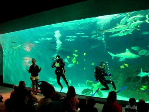 Visit At North Carolina Aquarium On Roanoke Island Kitty Hawk Vacation 2011 Avi Youtube