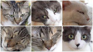 NyankuruTV Vol.4  にゃんくるTV【かわいい猫カフェ/保護猫】【Cute Cat Cafe】