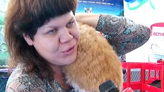 На выставке «Родные просторы» благовещенцев поразил кудрявый кот