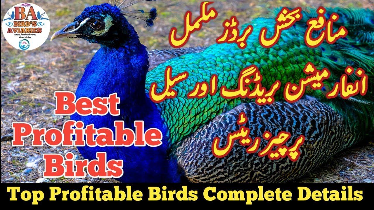 Best Profitable Birds Farming Business Idea    Top
