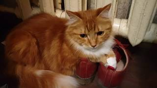cat and shooes