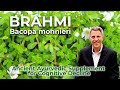 Bacopa monnieri -Ancient Ayurvedic Supplement for Cognitive Decline- FORD BREWER MD MPH