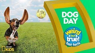 Dog Day   Weird But True: Fast Facts
