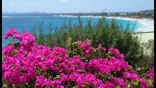 Ласточҡи Парки Флора Тенерифе Flora Tenerife