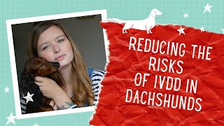 How to reduce the risks of IVDD in your Dachshund | UK Edition