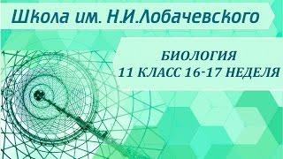 Биология 11 класс 16-17 неделя Антропогенез