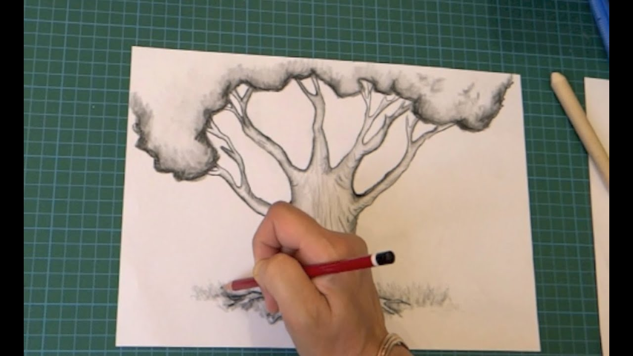 Comment Dessiner Un Arbre Etape Par Etape Youtube