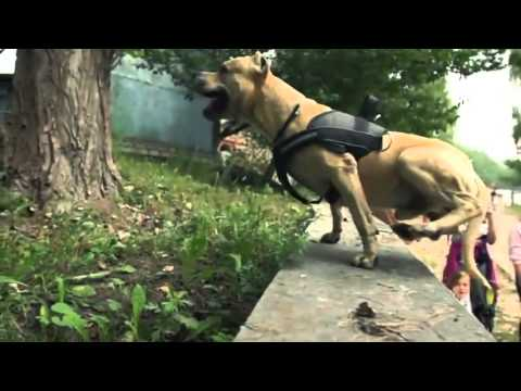 Epic Parkour - Super American Staffordshire Terrier !